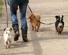 Researchers Want Your Dog Poop!