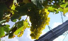 Loire Harvest Wine Tours