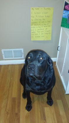 Dog Shame | I cheated on my diet today…Barkley