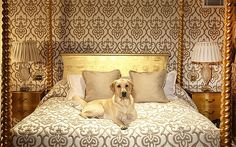 Our pets are part of our families so why should they be left behind when you go away ... We are a pet friendly hotel in Mayfair next to Green Park, see what we offer here ... bit.ly/1jCxNLI
