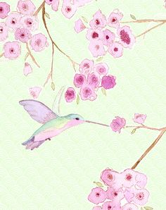 Hummingbird by Stephanie Ryan