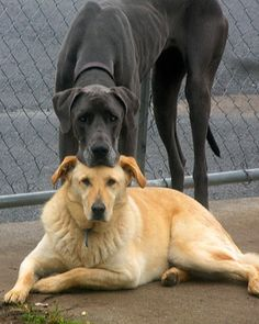 Friends Forever. Two heads are better than one, even in the doggie world. :)