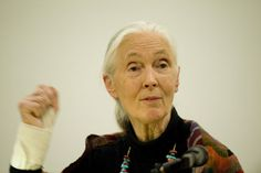 A special lecture on 'Reasons for Hope' by Dr Jane Goodall, DBE took place yesterday, Wednesday, 4 May 2011 in the New Medical Building, North Haugh, St Andrews, on the eve of the announcement of this year's winner and runners-up of the St Andrews Prize for the Environment.