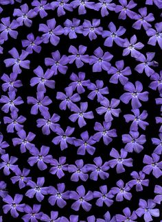 Love Purple!