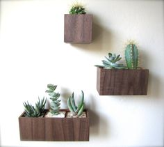 Set of THREE Wall Hanging Planters in WALNUT by thewoodybeckers, $80.00