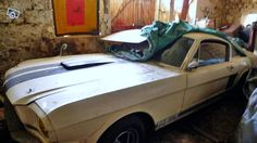 Shelbys Uncovered In France - http://barnfinds.com/shelbys-uncovered-in-france/