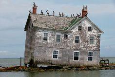 Last House on Holland Island, May 2010 by baldeaglebluff, via Flickr