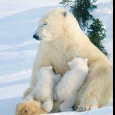 Mama bear nursing...heart melting.