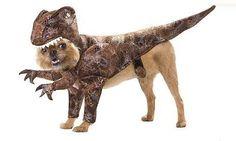 cat, barley, small dogs, halloween costumes, art, dog costumes, pet costumes, dog stuff, little dogs
