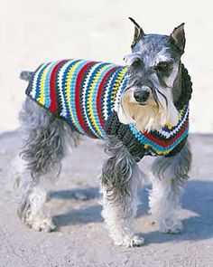 Bright and bold striped dog coat: free pattern
