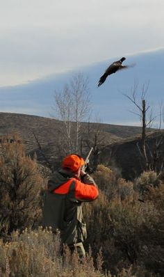 Pheasant Hunting - Red's Upland Bird Hunting Lodge Near Seattle