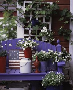 Red, White and Blue / Armstrong Garden Centers