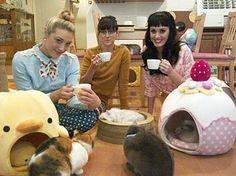 cats, japan, kati perri, cat cafe, katy perry, tea, kitty, friend, cat café