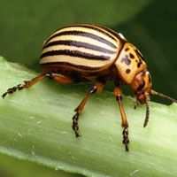 13 Headache-inducing Garden Pests and How to Control Them