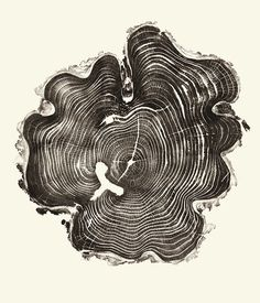 1 | Beautiful Photos Of Tree Rings Remind Us To Slow Down A Little | Co.Exist: World changing ideas and innovation