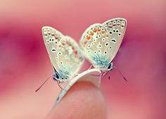 yayz butterflies by AsseveraVeta.deviantart.com