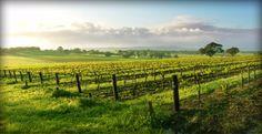 Yakima Washington Vineyards