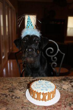 dog bone cake!