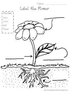 free label the plant printable for kindergarten