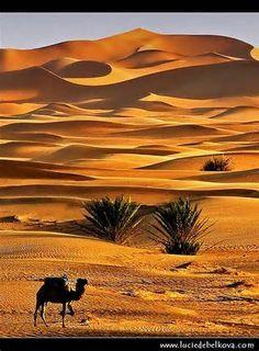 Erg Chebbi Desert Dunes at Merzouga  Morocco