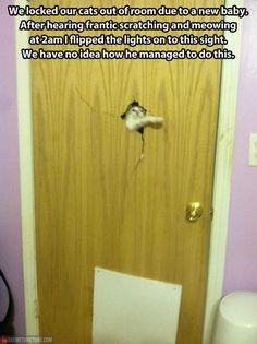 Heeere's Kitty!
