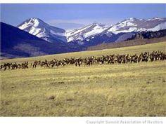 950 acres near Fairplay, $1,500,000
