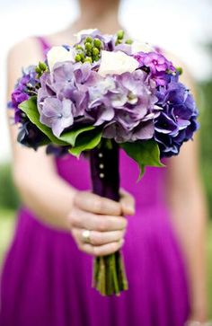 Bridesmaids bouquets of purple hydrangea, lavender garden roses and green hypericum.  No white all shades of purple with green berries