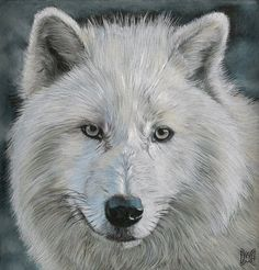 Arctic Wolf 2 - coloured pencils by *AnnemiekedW on deviantART