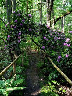 ✯ Rhododendron Path - Zwickau, Germany