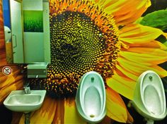 My Mother said she could hear the birds singing as she returned from the Ladies toilets at the petrol station at Norton Canes Service Station on the M6 toll road. I had to go & investigate the Gents & walked into this amazing display of Sunflower colour with bird songs recordings & all. Submitted by David Ditchfield.