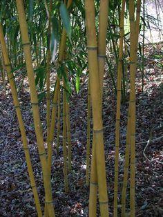 Bamboo  privacy screens, privaci screen