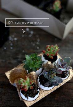 make your own egg carton planter