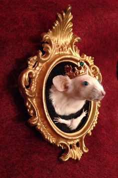 Royal Rodent Taxidermy Mouse Shoulder Mount with Paws on Etsy
