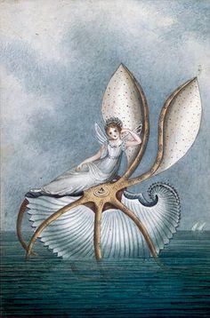 ≍ Nature's Fairy Nym
