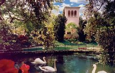 Beautiful Swans at the Hotel Bel-Air, CA