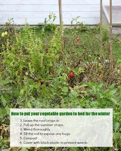 Putting the Garden to Bed for Winter, veggies, herbs, and flowers. Everything you need to know about making sure your gardening bed is healthy in the spring.