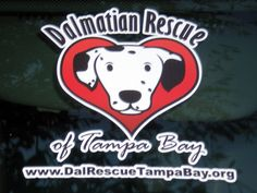 """A Grey Muzzle grant provides medical care, senior supplements, and medications for the """"old spots"""" who are part of Dalmation Rescue of Tampa Bay's """"sanctuary"""" program, for dogs who require hospice or long-term care in a foster home."""