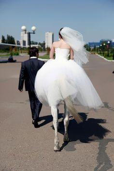 marriage with a white horse  fun PHOTOS