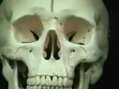 The Skull  (Anatomy & Physiology Lectures) Part 1