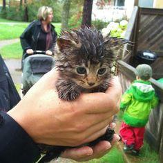 crazi cat, greasi cat, cat stuff, cat ladi