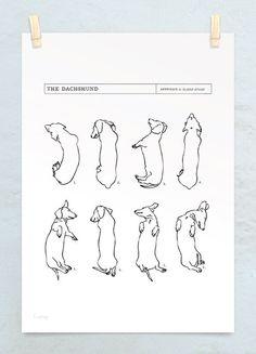 Wiener Dog Sleep Study.