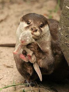 proud otter mommy