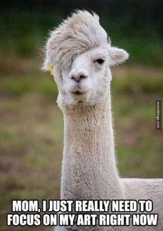 The artsy llama