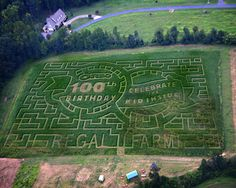 Best. Corn Maze. Ever. (Regal Corn Maze) #oreomoment