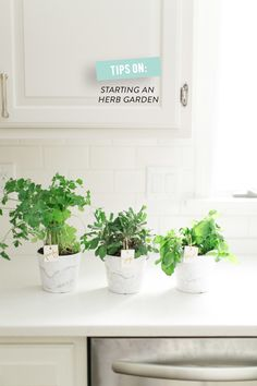 Tips on Starting an Indoor Herb Garden. There's probably zero hope for me when it comes to plants, but I'm still intrigued.