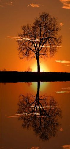 Monocacy Sunset Tree Reflection by Don Johnson