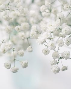 Baby's Breath ~ easy to grow and great cutting flower