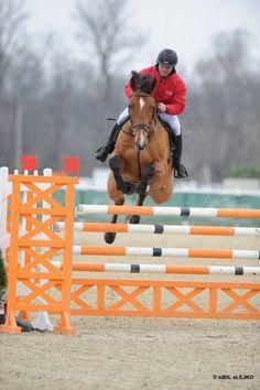 Aro - Czech Warmblood - Jumper