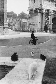 rome, 1959  photo by henri cartier-bresson/magnum photos, from the europeans