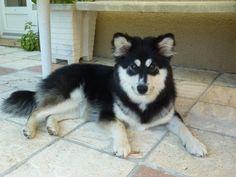 Ma chienne Eikki
